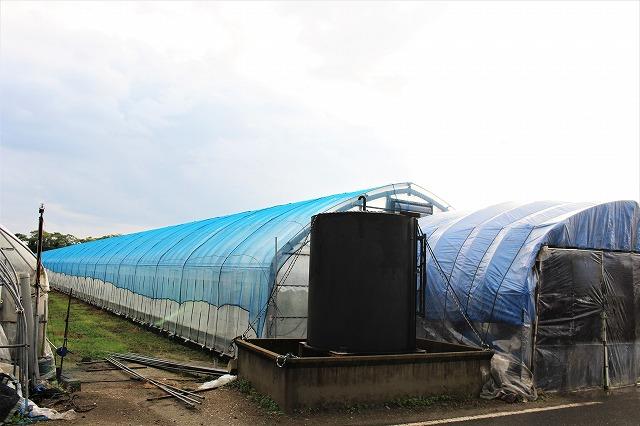 ビニールハウス 倉田ミニトマト農園